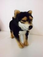 サムネイル:柴犬 黒
